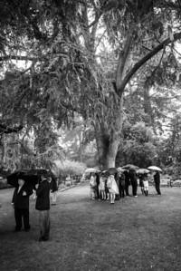 6864_d800_Nicole_and_Jesse_Shakespeare_Garden_Golden_Gate_Park_Wedding_Photography