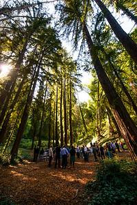 7489_d800_pamela and william wedding_wagners grove harvey west park santa cruz