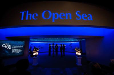 6969_d3_Kirsten_and_Bob_Monterey_Bay_Aquarium_Wedding_Photography