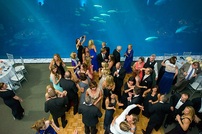 2673_d800_Kirsten_and_Bob_Monterey_Bay_Aquarium_Wedding_Photography