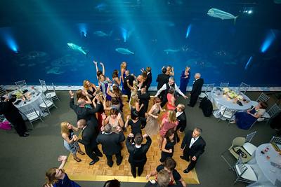 2682_d800_Kirsten_and_Bob_Monterey_Bay_Aquarium_Wedding_Photography