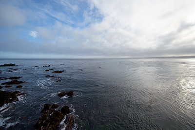 1611_d800_Kirsten_and_Bob_Monterey_Bay_Aquarium_Wedding_Photography