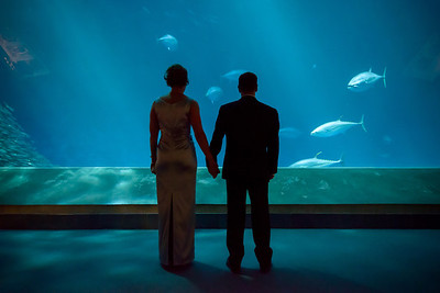 2041_d800_Kirsten_and_Bob_Monterey_Bay_Aquarium_Wedding_Photography