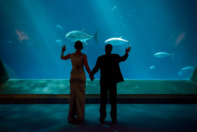 2044_d800_Kirsten_and_Bob_Monterey_Bay_Aquarium_Wedding_Photography