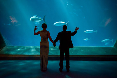 2045_d800_Kirsten_and_Bob_Monterey_Bay_Aquarium_Wedding_Photography