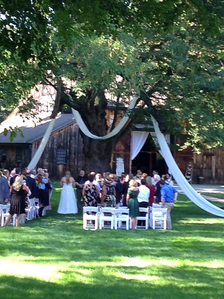 Draping in the ceremony tree