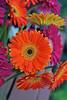 arc-w-072011-0036