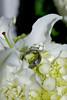 ino-w-082011-0042