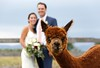 Hope and Ben - Sept 17, 2017 - Vermont Alpaca Farm - Bridport, VT<br /> <br /> ©Brian Mohr and Emily Johnson/ EmberPhoto - All rights reserved