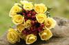 Roses---FMK_1396-1