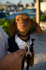 Onyx leading the way for Leah to marry Ian at the Beachhouse!