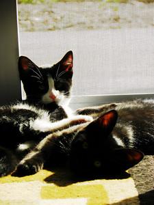 Relaxin in the sun