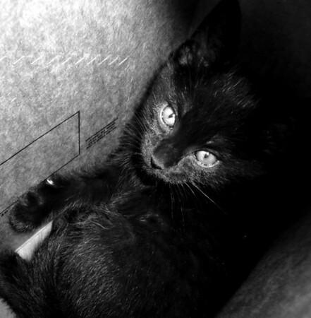 Midnight playin in a pepsi box