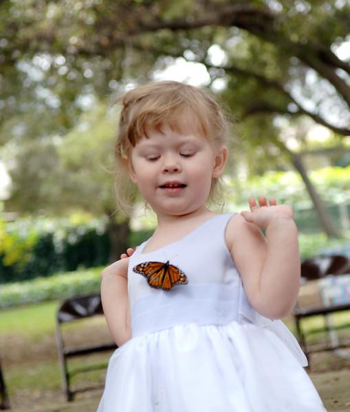 wedding_butterfly