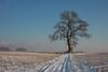 hendrik haustraete - een boom van een boom
