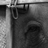 Stijn Janssens - Elephant