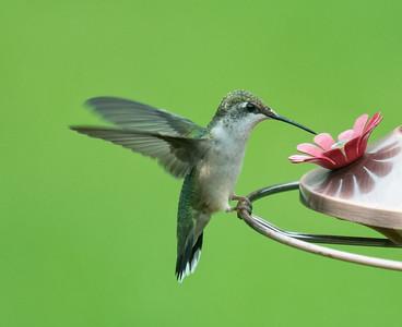 Wee Birdies