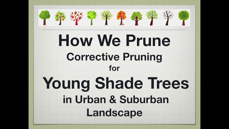 How We Prune