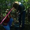 Caragana Weeding