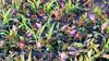 Healthy seedling grain, dieing weeds