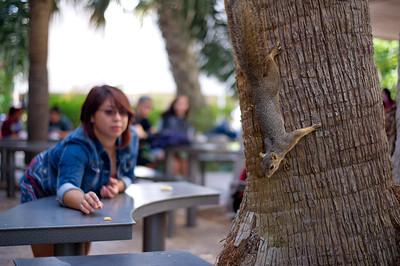 Caryn Garcia feeds our friendly squirrel right outside of Starbucks.