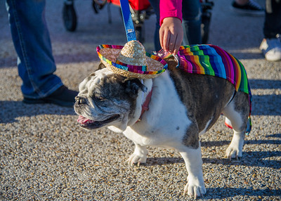 "One of the many four-legged participants who took part in the ""Paws for a Cause"" event on campus."