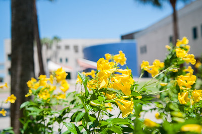 Flowers bloomed outside of the Center of Instruction building.