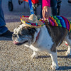 """One of the many four-legged participants who took part in the """"Paws for a Cause"""" event on campus."""