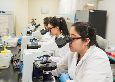 Selina Dominguez looks through a microscope to examine cells in Hematology.