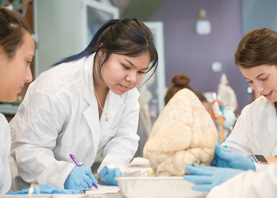 Ana Cerda records her findings on the insides of a cow heart for Anatomy and Physiology II.