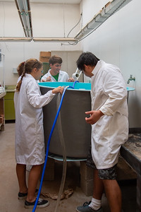 Rachael Klose, Nin Gan, Jessie Castenier, Ryan Rubino and Aline Trejo all work together to fix a pipe connecting a shrimp tank and filtration tank.
