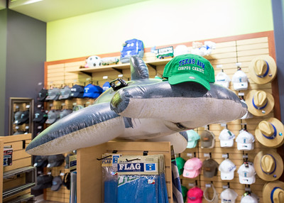 Hunter the Hammerhead smiles for the camera in the University Bookstore.  Learn about TAMU-CC's participation in Shark Week:  http://bit.ly/2uIUKYq
