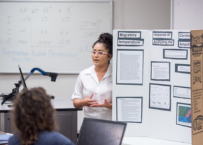 Jasmine Rodriguez presents her reasearch over the migratory responses of Great White Sharks for Dr. Gregory Buck's Professional Skills course.   Fun Fact: Jasmine Rodriguez is making an Islander Impact by working with The Harte Research Institute for Gulf of Mexico Studies researchers during Shark Week!