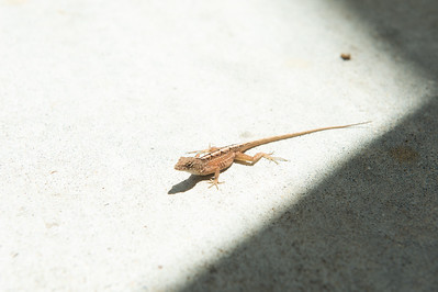 Up close and personal with a little fella on campus on a unny Friday