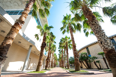 Beautiful view of the palms trees located behind Bay Hall.