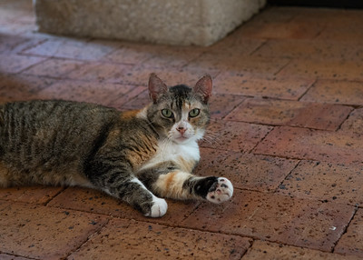 From Cat Alley to the breezeway we have one of our little fellas cathcing a breeze themselves