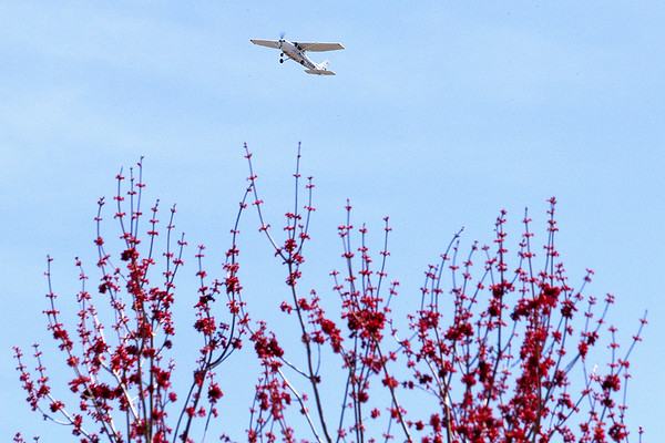 Record-Eagle/Tessa Lighty <br /> An airplane flies over a tree blossoming with spring color at the Civic Center in Traverse City.