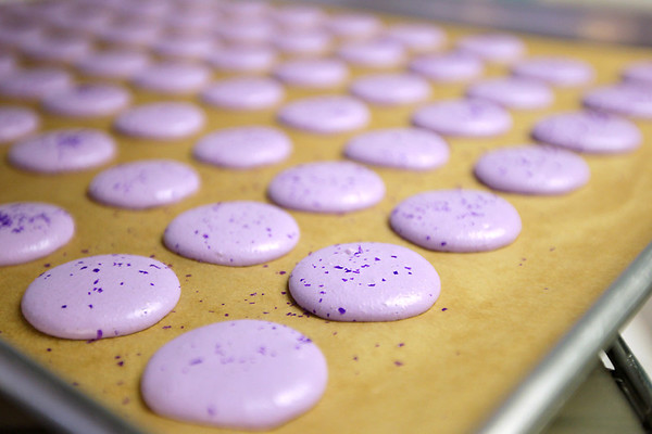 Record-Eagle/Keith King<br /> French macaron dough rests on a sheet prior to being baked into cookies at Simply Cupcakes in Traverse City.