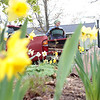 "Record-Eagle/Jan-Michael Stump<br /> Mary Van Valin unloads mulch from her ""little red truck"" to spread on the front lawn garden of her Webster Street home on Monday afternoon. ""This is like a never-ending job,"" said Van Valin."
