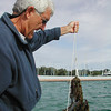 Record-Eagle/Sheri McWhirter<br /> John Nelson, Grand Traverse baykeeper, pulls an anchor weighted with water milfoil from the water.