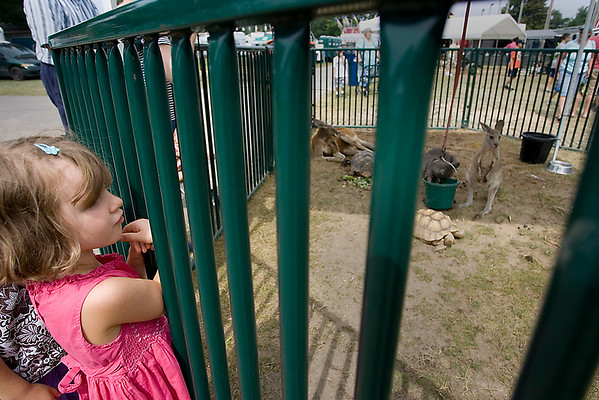 Record-Eagle/Keith King<br /> Amabel Schwaiger, 4, of Traverse City, looks at exotic animals such as a sulcata tortoise, red kangaroo, eastern gray kangaroo and a wallaroo Friday, August 13, 2010 at the Northwestern Michigan Fair.
