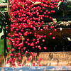 Record-Eagle photo/Jan-Michael Stump<br /> Tart cherries fall off a conveyor belt and into a container during their harvest on Old Mission Peninsula.