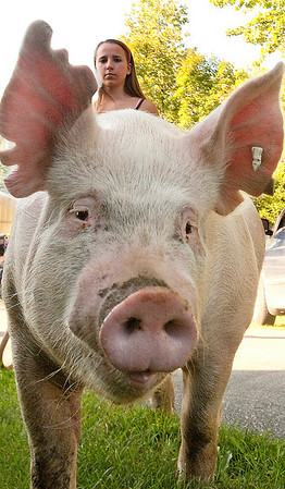 Record-Eagle/Douglas Tesner<br /> Lauren Franke, 16, a member of Green Acres 4-H group, walks her 259-pound pig Diego along Blair Townhall Road. The duo makes the two-mile trek every day. Shell be showing the pig at the Northwestern Michigan Fair, which begins Saturday.