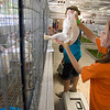 Record-Eagle/Keith King<br /> 4-H member Abigail Hockin, 11, of Traverse City, places her rabbit in its cage Saturday as animals arrive for the start of the Northwestern Michigan Fair.