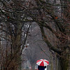 "Record-Eagle/Jan-Michael Stump<br /> ""Out walking Harry in the rain,"" said Bill Mathias as he and his dog Harry made their way up Elmwood Avenue in Traverse City on a rainy Wednesday afternoon."