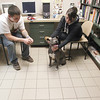 Record-Eagle/Jan-Michael Stump<br /> Dan Kelsey, left, and Amanda Bush spend some time with Zaida to see if she would be a good dog to adopt.