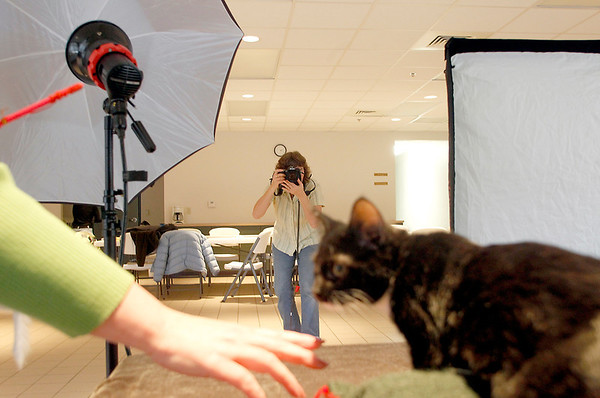 "Record-Eagle/Jan-Michael Stump<br /> Volunteer Laura Dagwell tries to get a cat to sit still and face the camera for Kimberli Bindschatel, who takes formal portraits of animals at the Cherryland Humane Society so they have nicer pictures for adoption ads. ""It's really gratifying volunteering doing something where you have a special skill,"" she said of her weekly shoots."