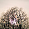 Record-Eagle/Jan-Michael Stump<br /> The sun shines through a tree near Hartman Road on Wednesday afternoon.