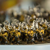 Record-Eagle/Jan-Michael Stump<br /> Warhammer miniatures sit on a table at Mayhem Games. Owner Don MacIntyre is hosting family nights at the store, where families can come try various miniature, tabletop or role playing games.