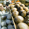 "Record-Eagle/Jan-Michael Stump<br /> Becky Potter fills racks with paczki at Potter's Bakery Tuesday. The bakery made over 12,400 paczki for Fat Tuesday this year -- 200 dozen more than last year -- at its 8th Street location. Paczki, a fried, doughnut-like pastry filled with a variety of jellies or cream, are a traditional Polish treat for the day before Ash Wednesday and the start of Lent. ""It's been a zoo,"" said Kathy Potter, who said custard has been the top filling choice, followed by red raspberry. Prune, the traditional filling, has been the least favorite."